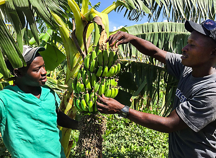 A new three-week residential training and internship program for Haitian villagers.