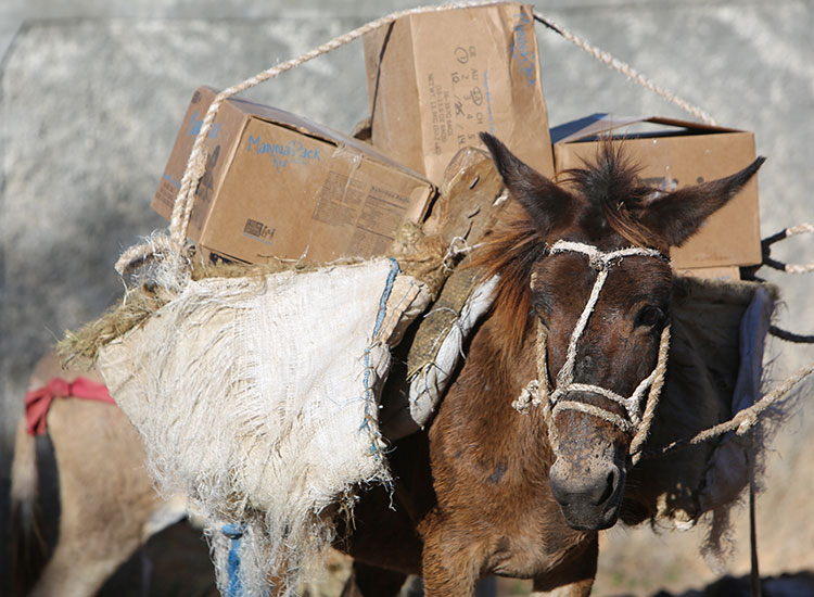 Donkeys bring food up into the remote moutain villages in Haiti.