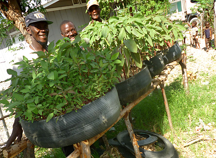 This is amaranth spinach grows! This is an easy vegetable for Haitians to grow.