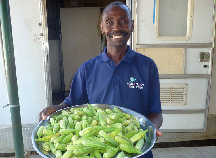 Haitians grow nutritional food.