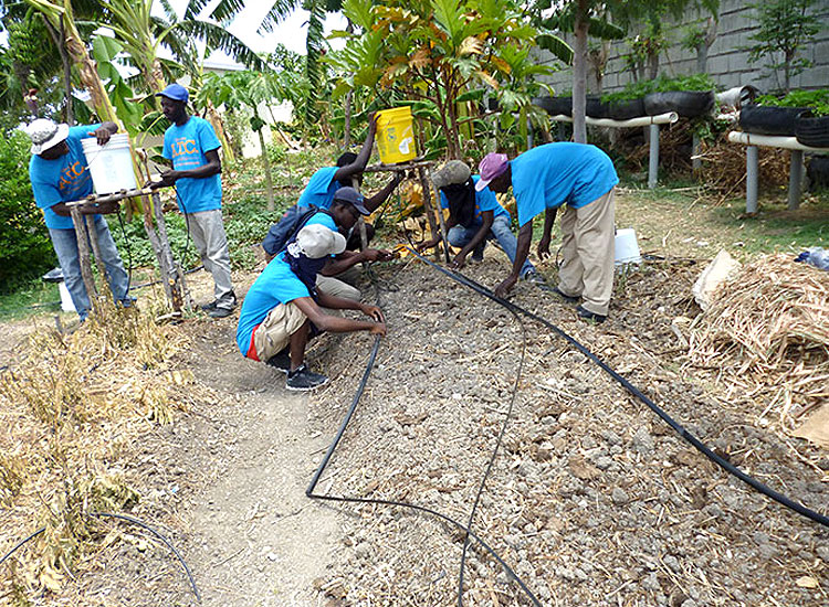 Drip irrigation is the most effective and efficient way to provide the plants with critical water
