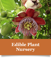edible-plant-nursey