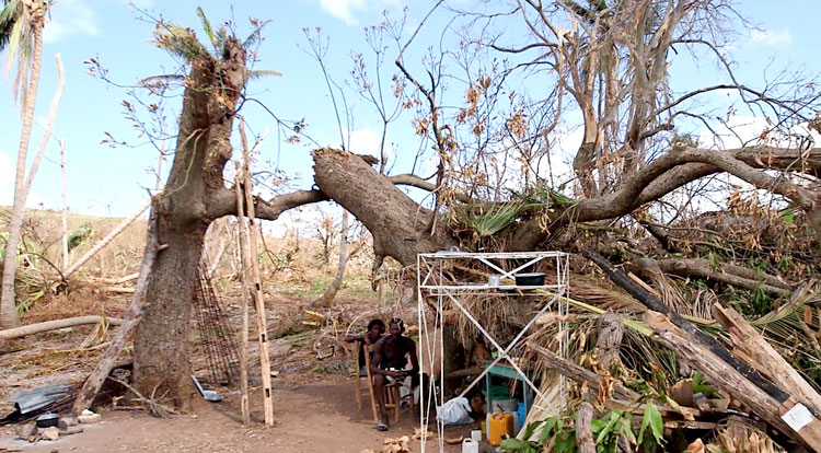 Haitian farmer now lives under fallen trees.