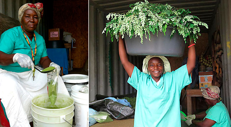 2016 Year in Review Moringa production