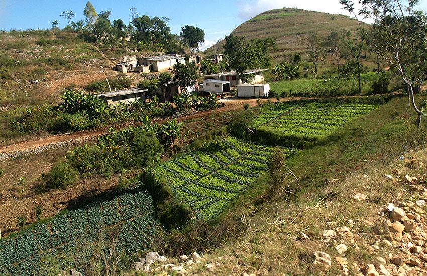 Growing food in Haiti.